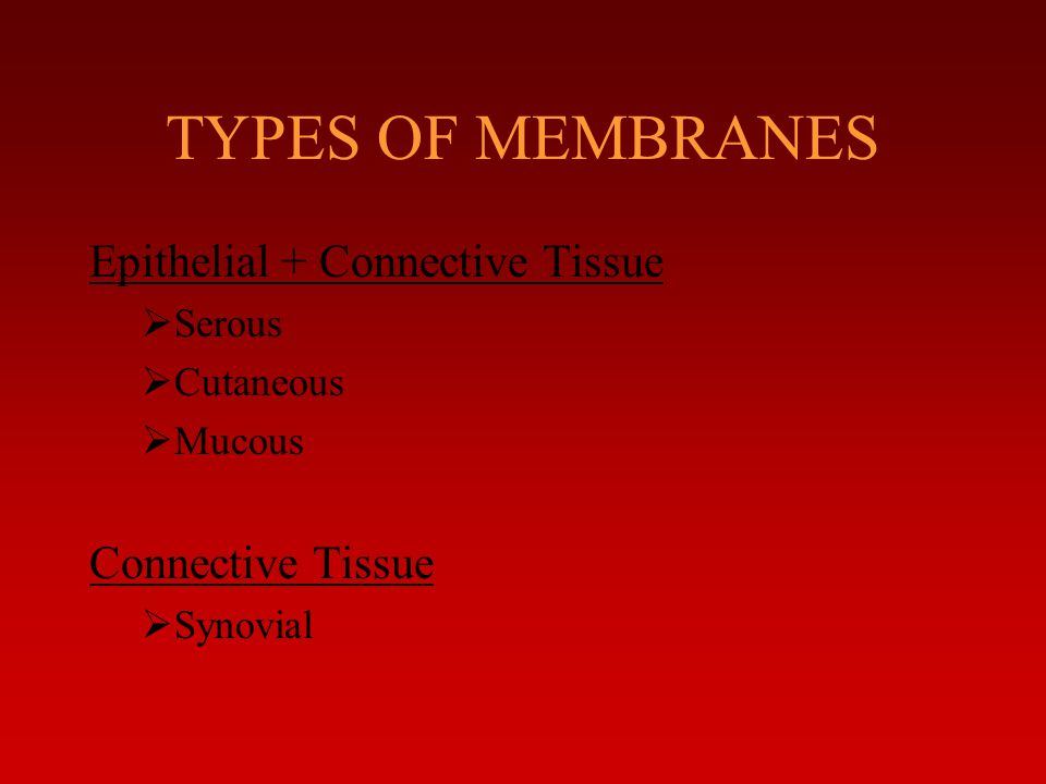 TYPES OF MEMBRANES Epithelial + Connective Tissue Connective Tissue
