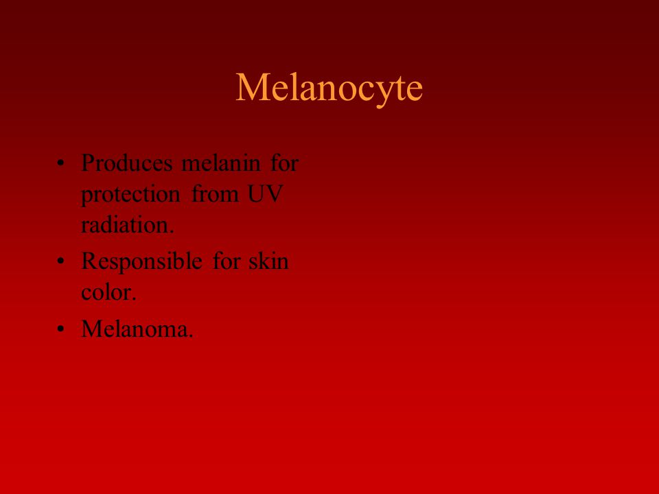 Melanocyte Produces melanin for protection from UV radiation.