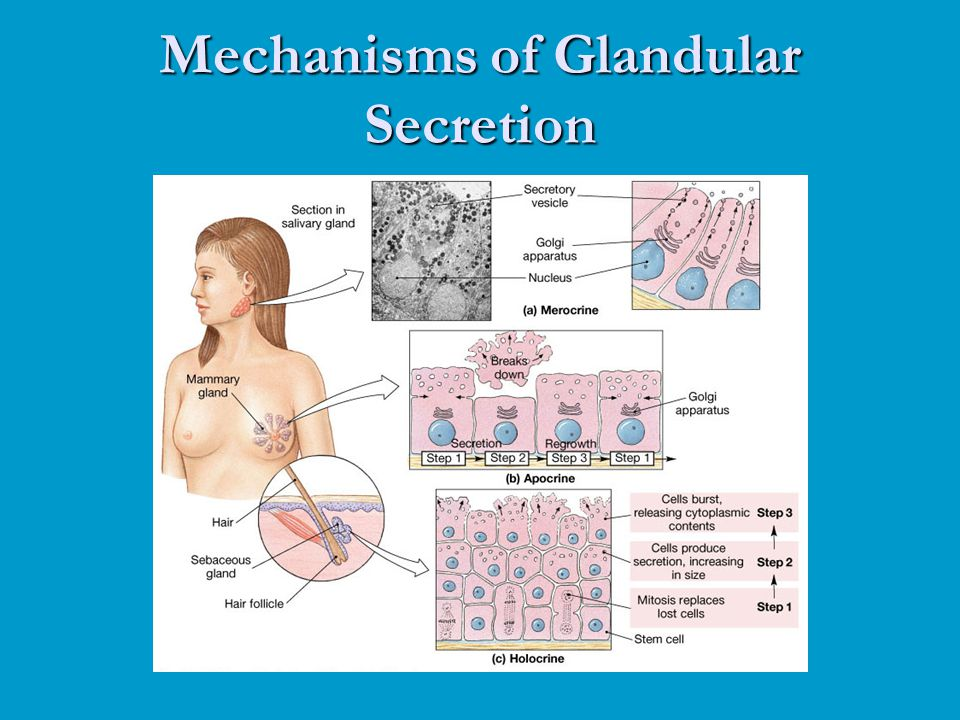 Mechanisms of Glandular Secretion