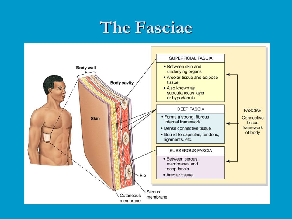 The Fasciae