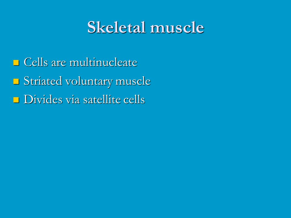 Skeletal muscle Cells are multinucleate Striated voluntary muscle