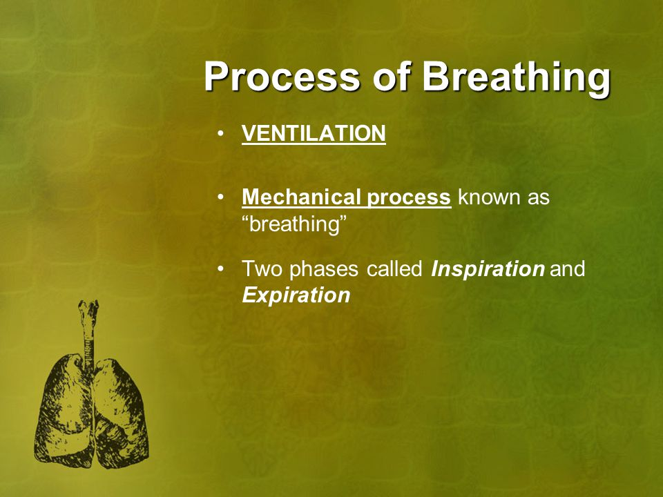 Process of Breathing VENTILATION