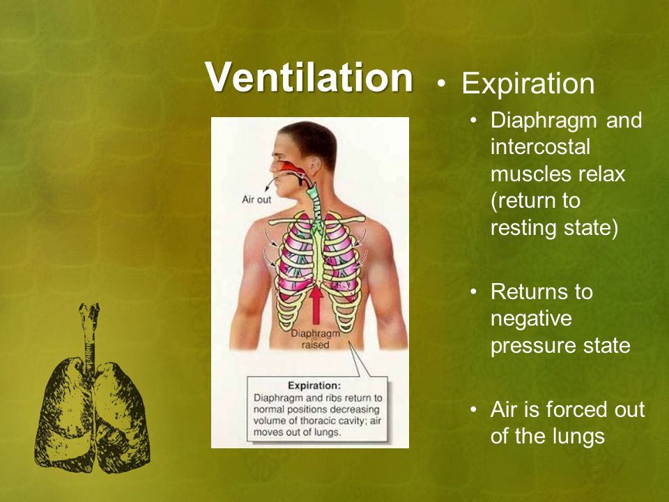 Ventilation Expiration