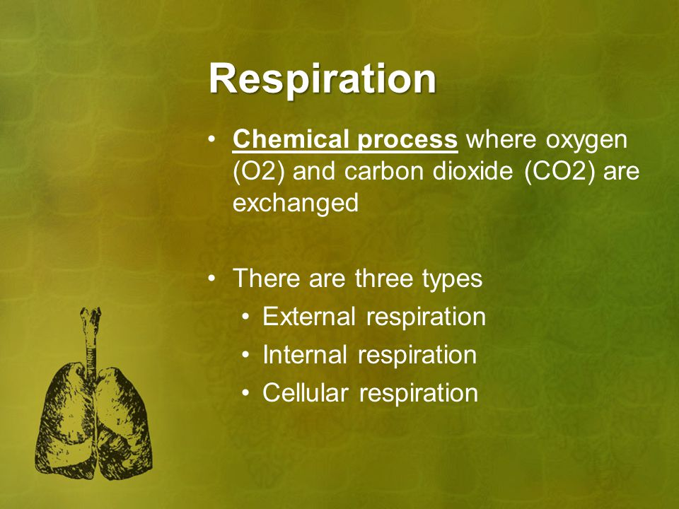 Respiration Chemical process where oxygen (O2) and carbon dioxide (CO2) are exchanged. There are three types.