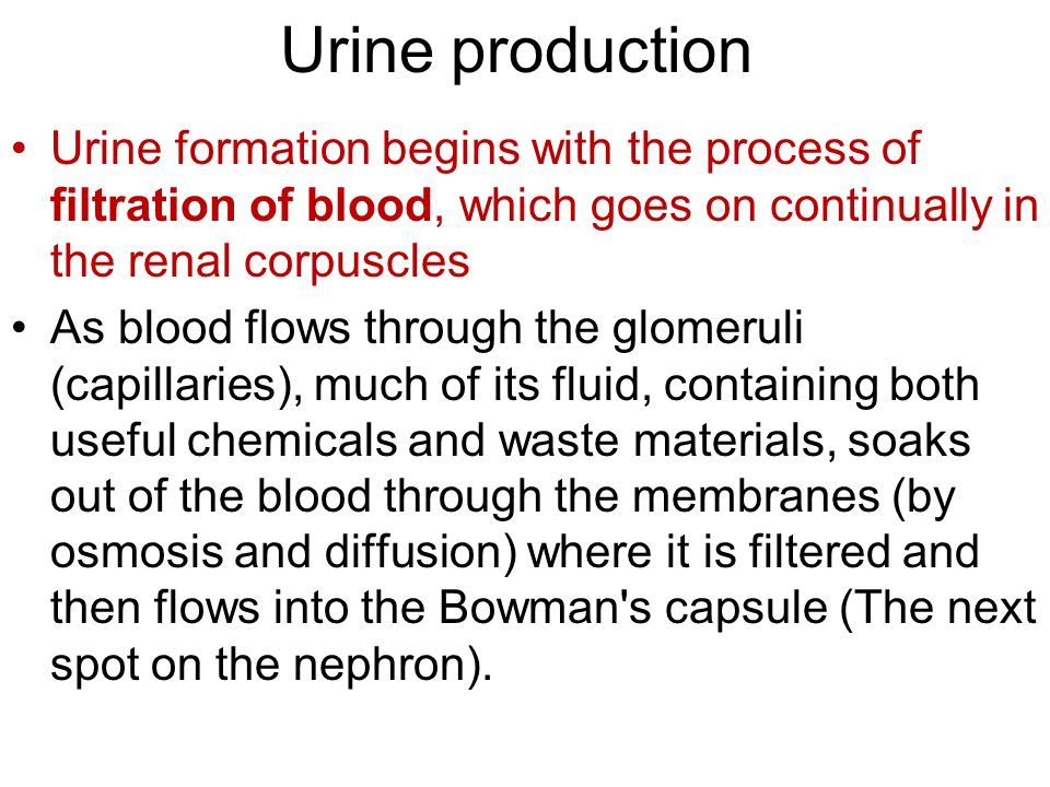 Urine production Urine formation begins with the process of filtration of blood, which goes on continually in the renal corpuscles.