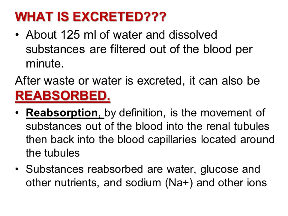 WHAT IS EXCRETED About 125 ml of water and dissolved substances are filtered out of the blood per minute.