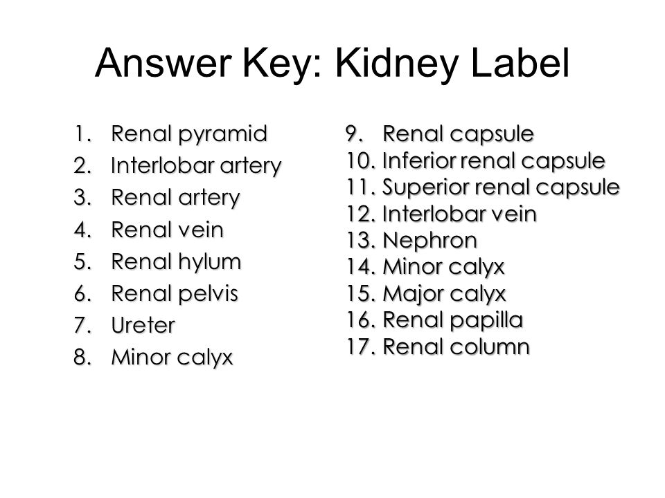 Answer Key: Kidney Label
