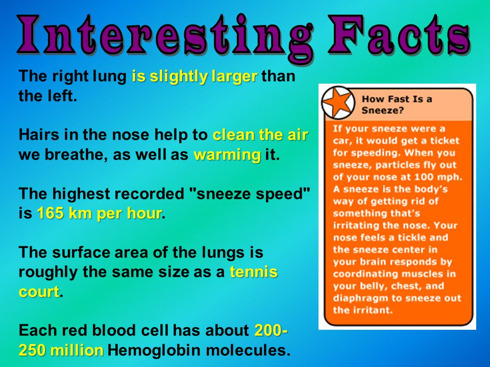 Interesting Facts The right lung is slightly larger than the left.
