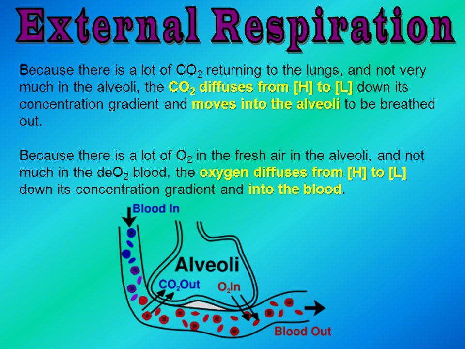 External Respiration