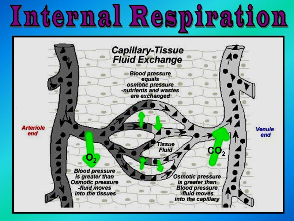 Internal Respiration CO2 O2