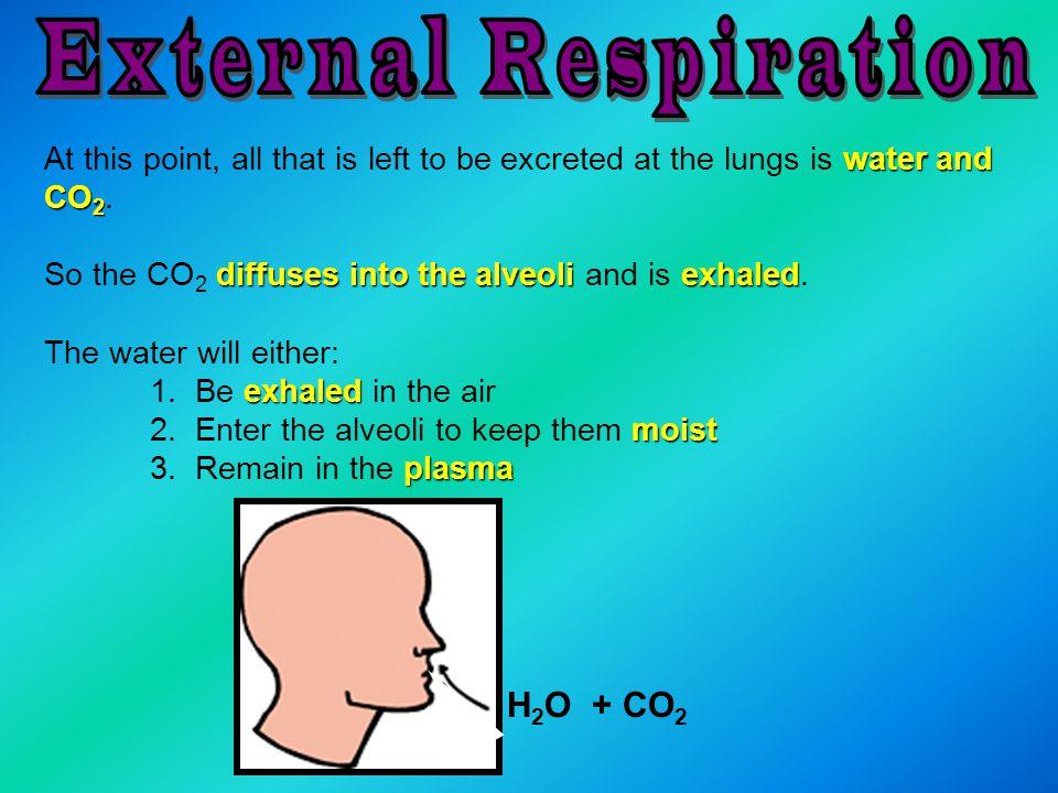 External Respiration H2O + CO2