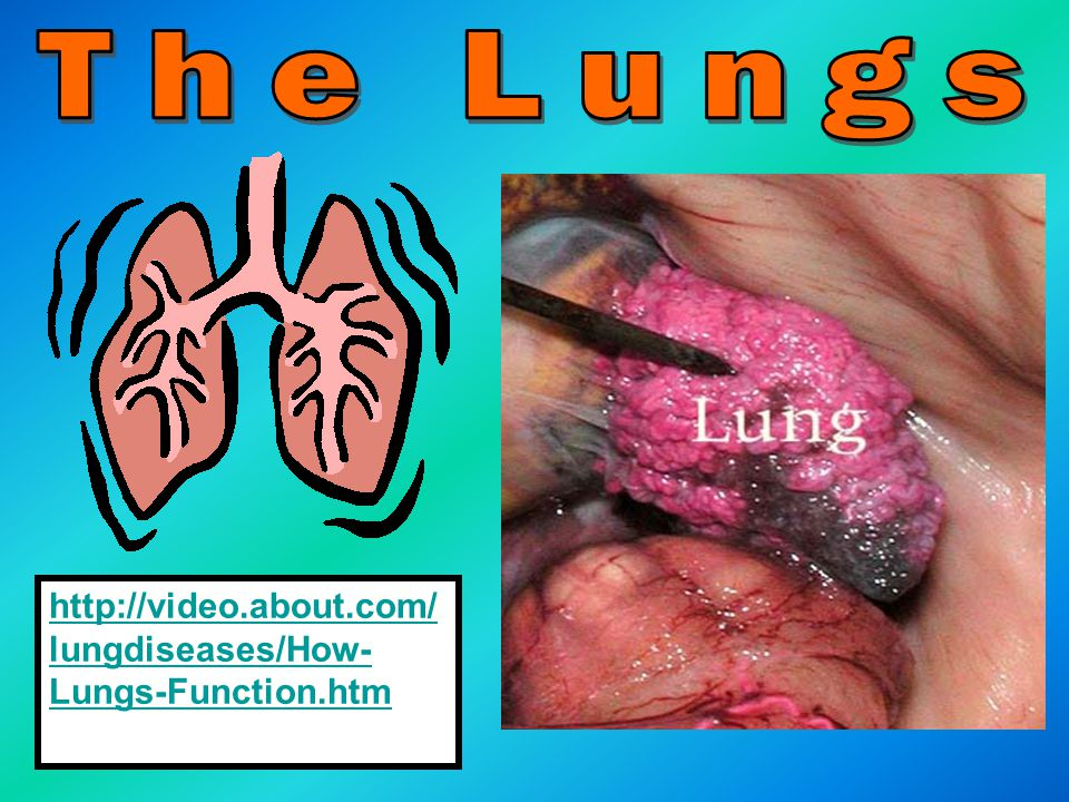 The Lungs http://video.about.com/lungdiseases/How-Lungs-Function.htm