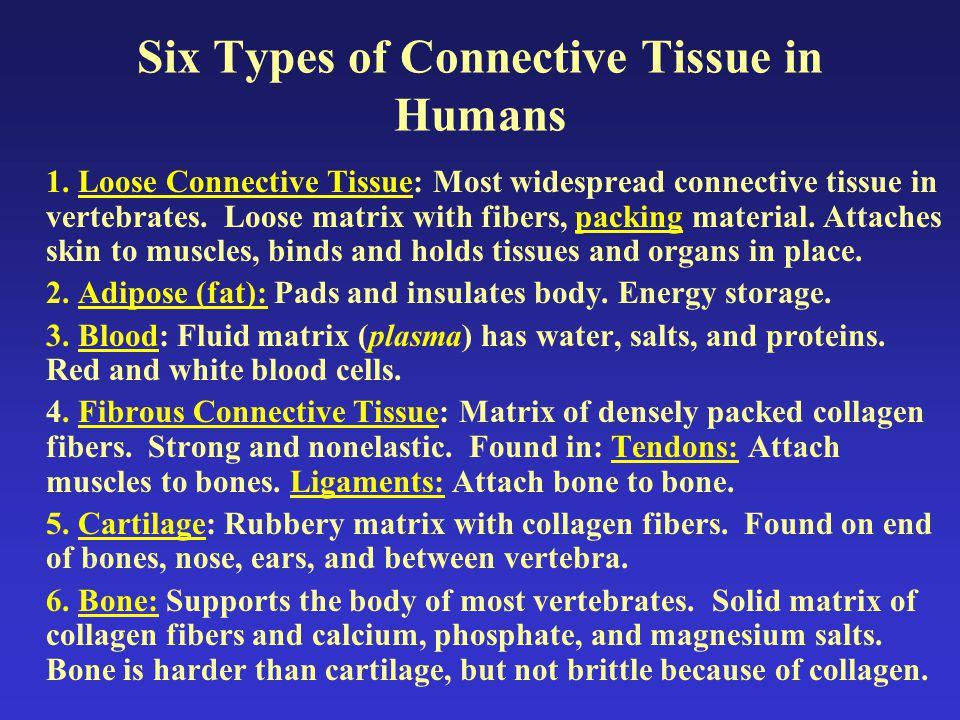 Six Types of Connective Tissue in Humans