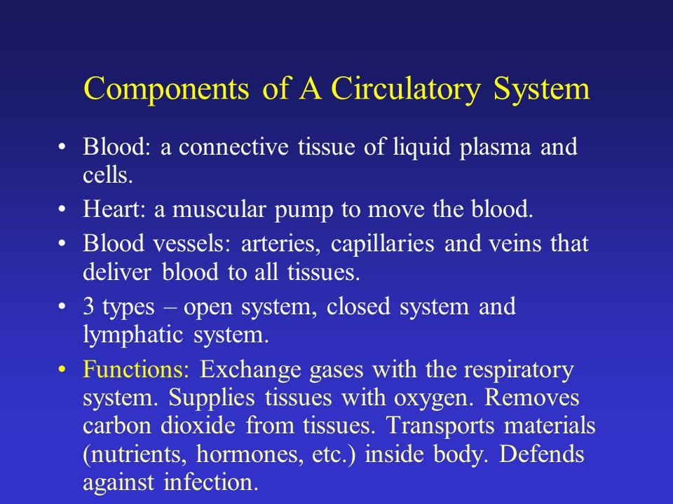 Components of A Circulatory System