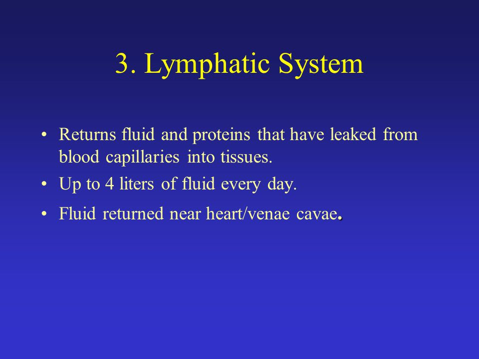 3. Lymphatic System Returns fluid and proteins that have leaked from blood capillaries into tissues.