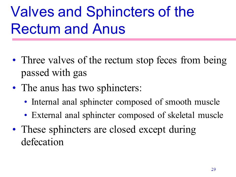 Valves and Sphincters of the Rectum and Anus