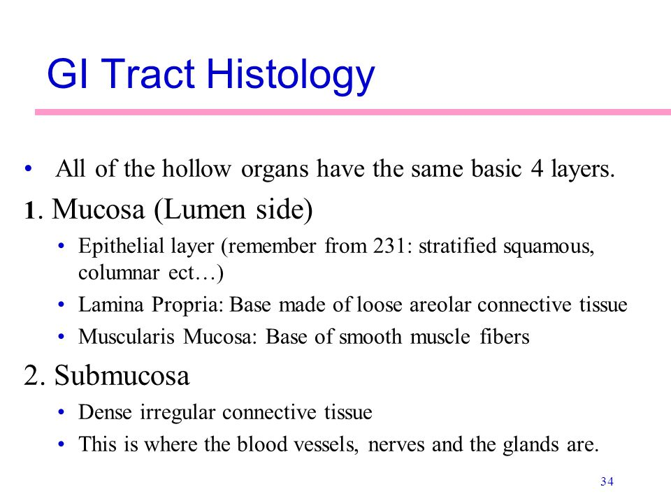 GI Tract Histology 2. Submucosa