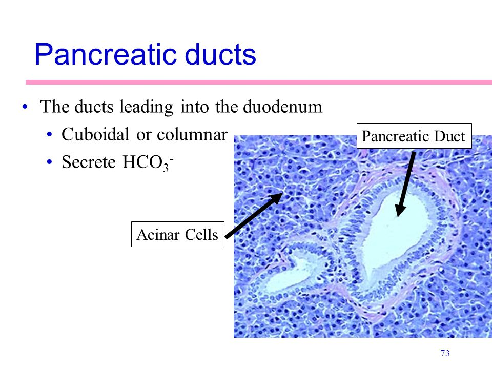 Pancreatic ducts The ducts leading into the duodenum