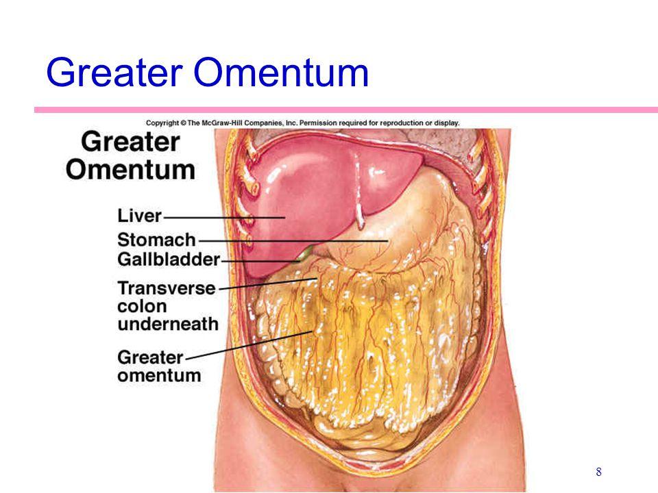 Greater Omentum
