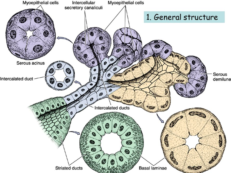 1. General structure