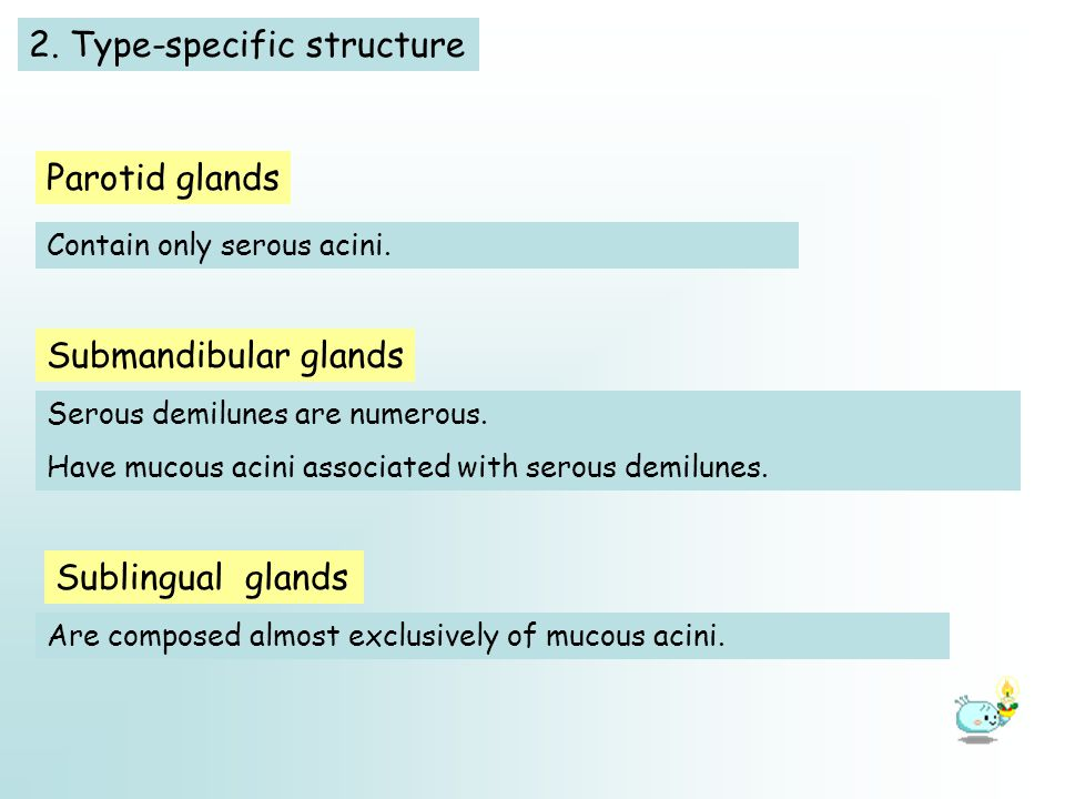 2. Type-specific structure