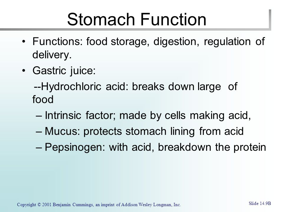 Stomach Function Functions: food storage, digestion, regulation of delivery. Gastric juice: