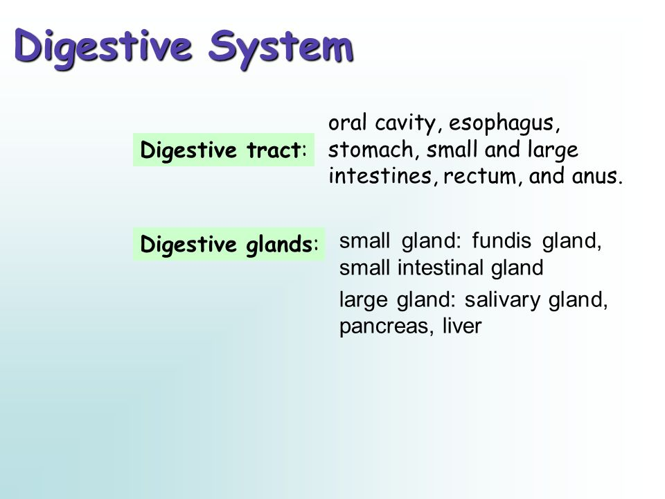 Digestive System oral cavity, esophagus, stomach, small and large intestines, rectum, and anus. Digestive tract: