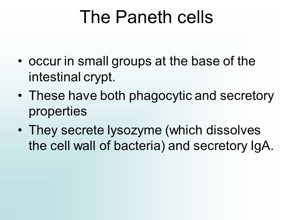 The Paneth cells occur in small groups at the base of the intestinal crypt. These have both phagocytic and secretory properties.