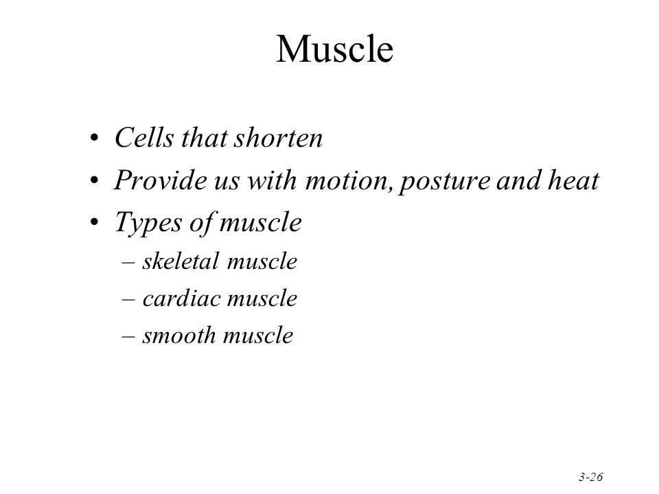 Muscle Cells that shorten Provide us with motion, posture and heat