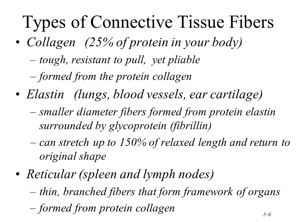 Types of Connective Tissue Fibers
