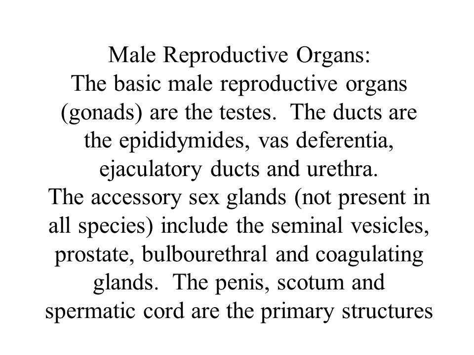 Male Reproductive Organs: The basic male reproductive organs (gonads) are the testes.