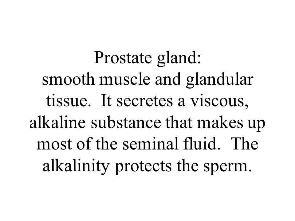 Prostate gland: smooth muscle and glandular tissue