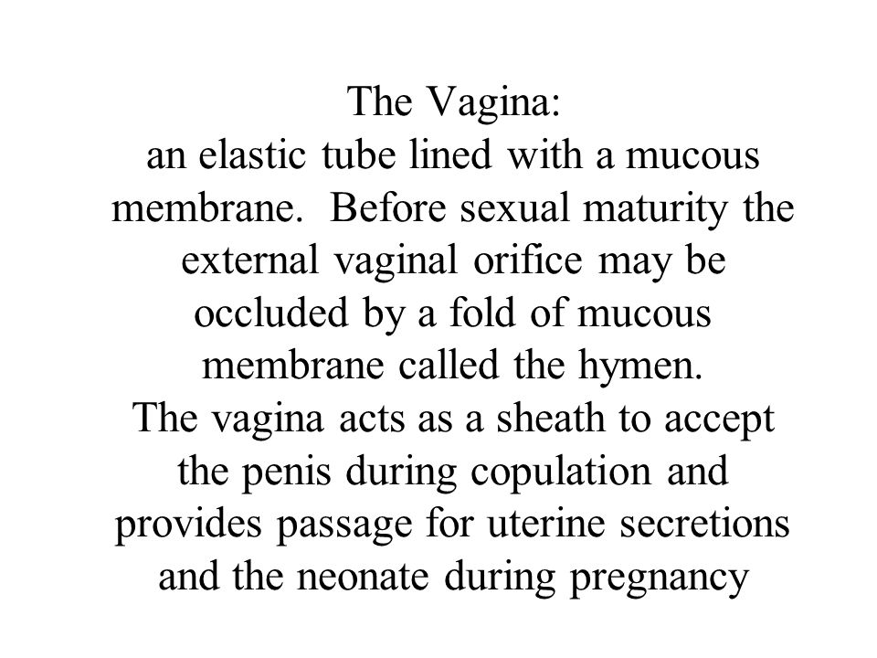 The Vagina: an elastic tube lined with a mucous membrane