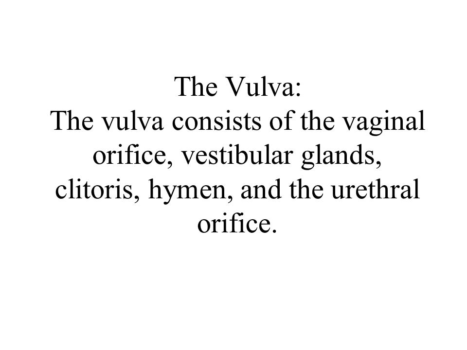 The Vulva: The vulva consists of the vaginal orifice, vestibular glands, clitoris, hymen, and the urethral orifice.