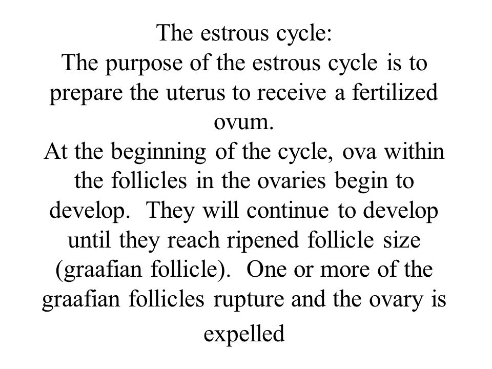 The estrous cycle: The purpose of the estrous cycle is to prepare the uterus to receive a fertilized ovum.