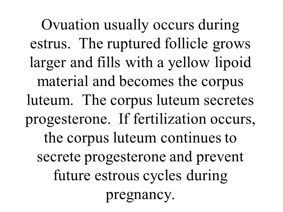 Ovuation usually occurs during estrus