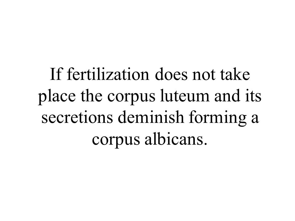 If fertilization does not take place the corpus luteum and its secretions deminish forming a corpus albicans.