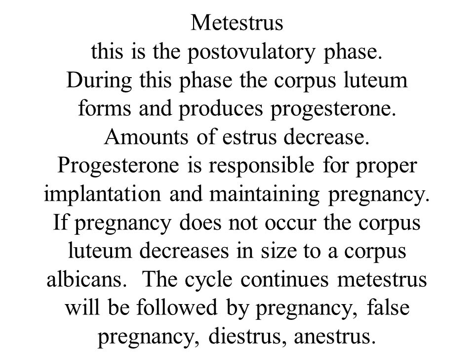 Metestrus this is the postovulatory phase