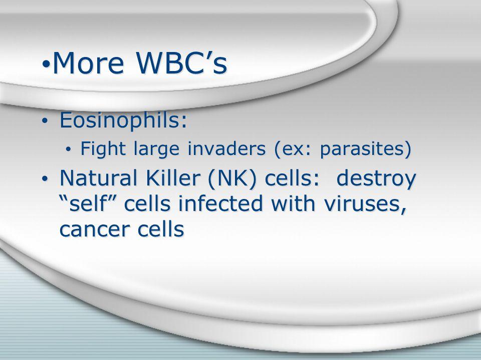 More WBC's Eosinophils: