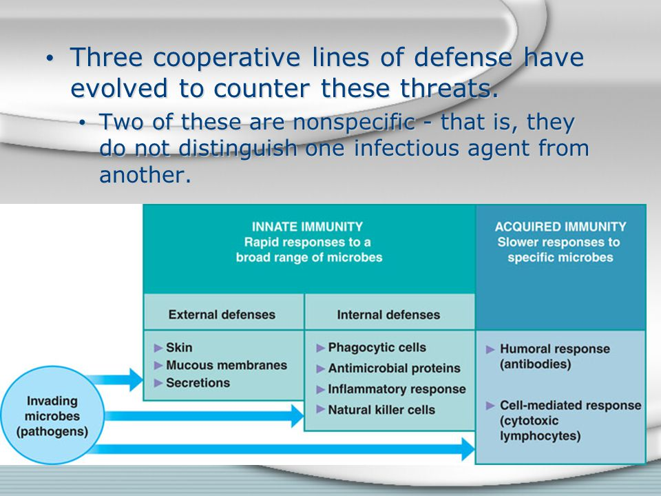 Three cooperative lines of defense have evolved to counter these threats.