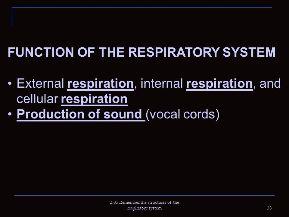 2.05 Remember the structures of the respiratory system
