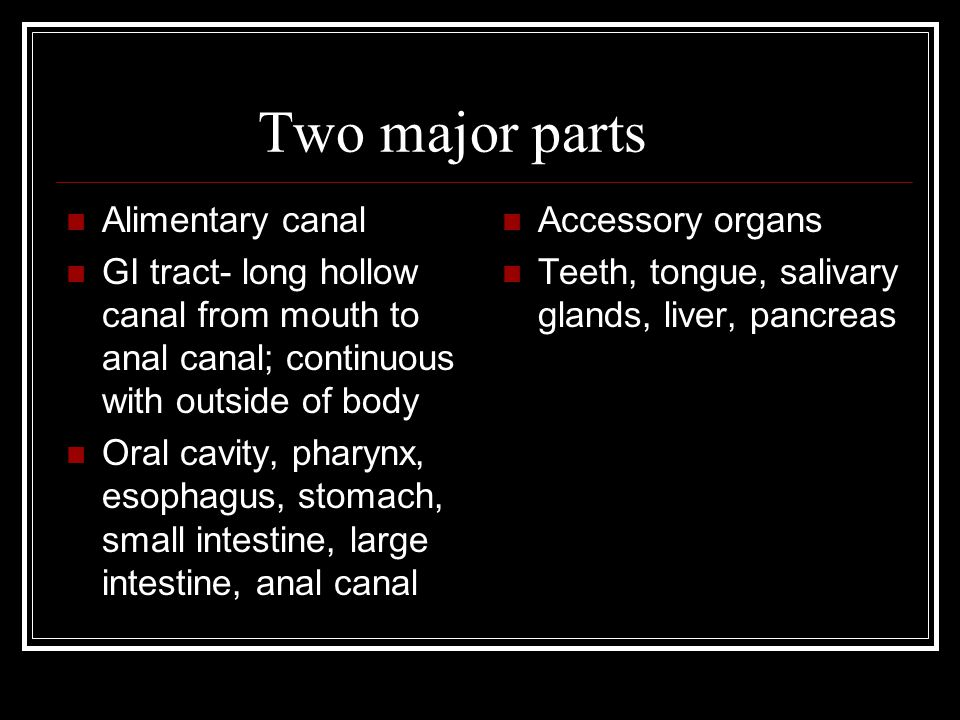 Two major parts Alimentary canal
