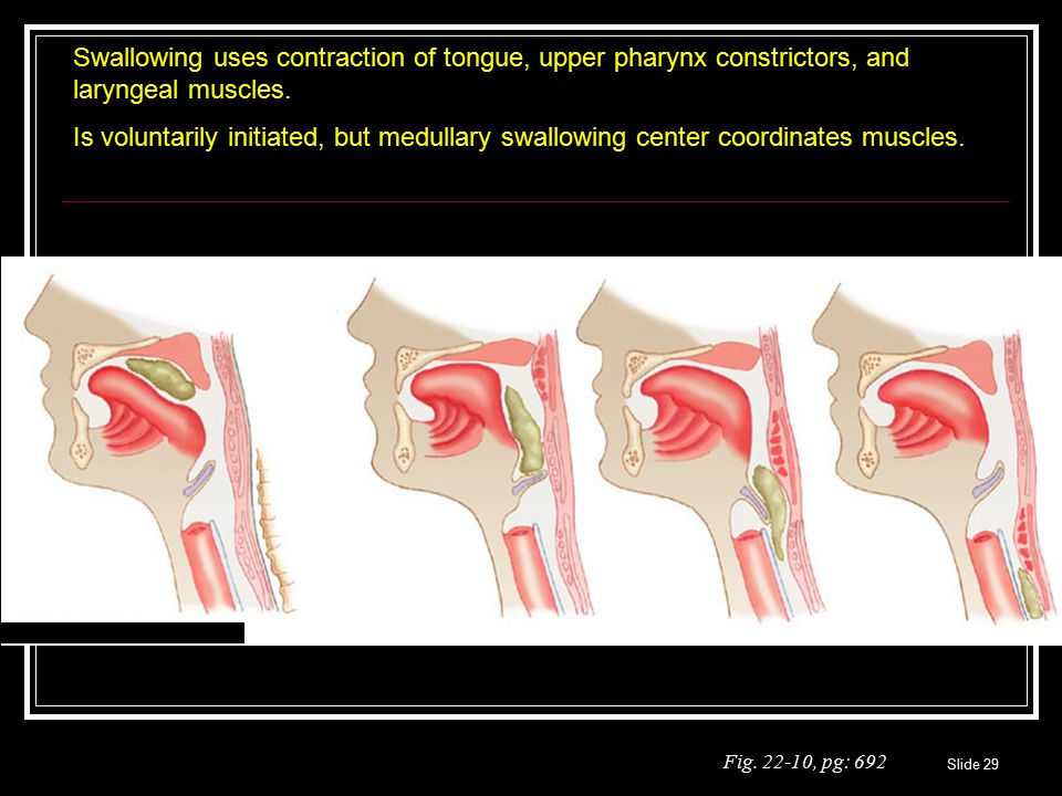 Swallowing uses contraction of tongue, upper pharynx constrictors, and laryngeal muscles.