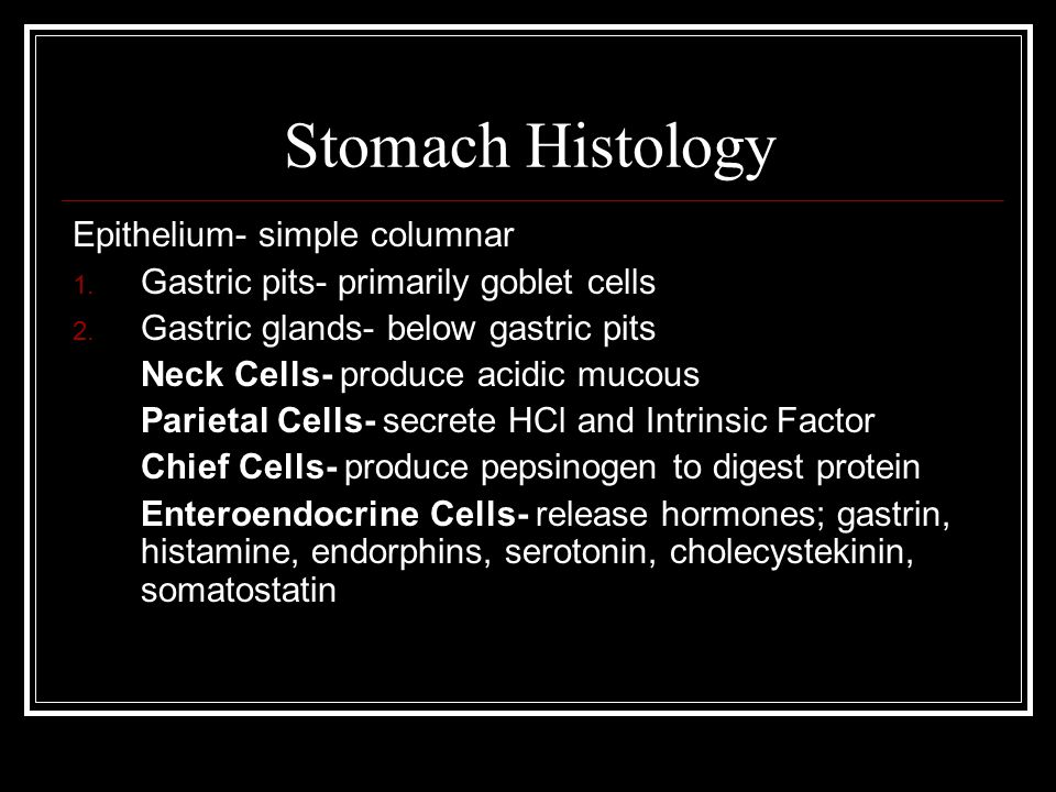 Stomach Histology Epithelium- simple columnar