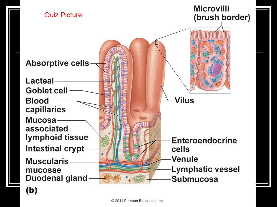 Quiz Picture