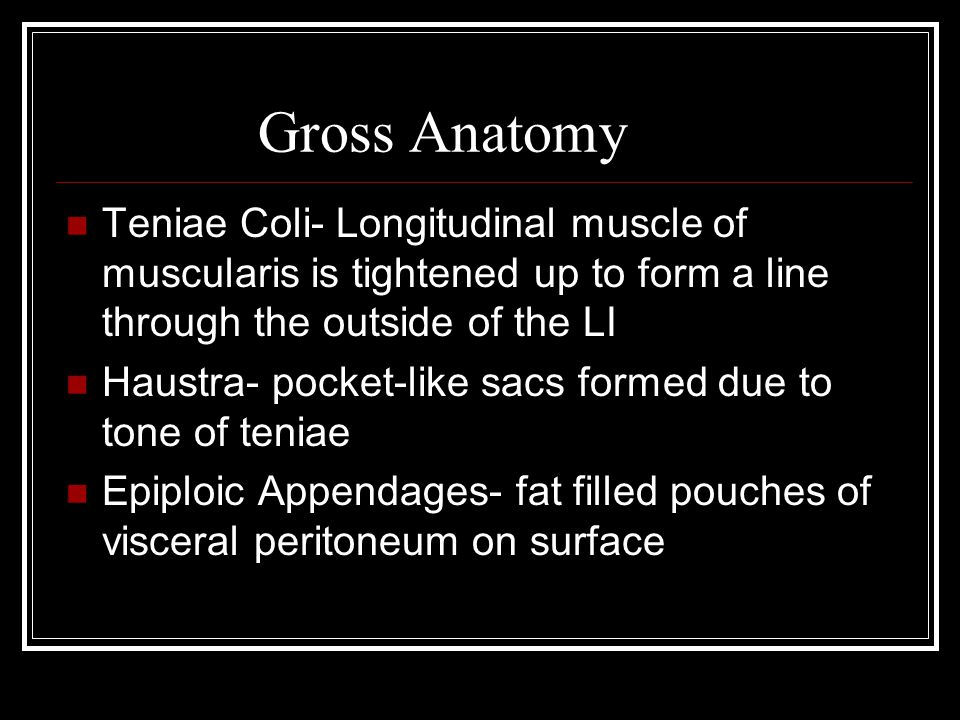 Gross Anatomy Teniae Coli- Longitudinal muscle of muscularis is tightened up to form a line through the outside of the LI.
