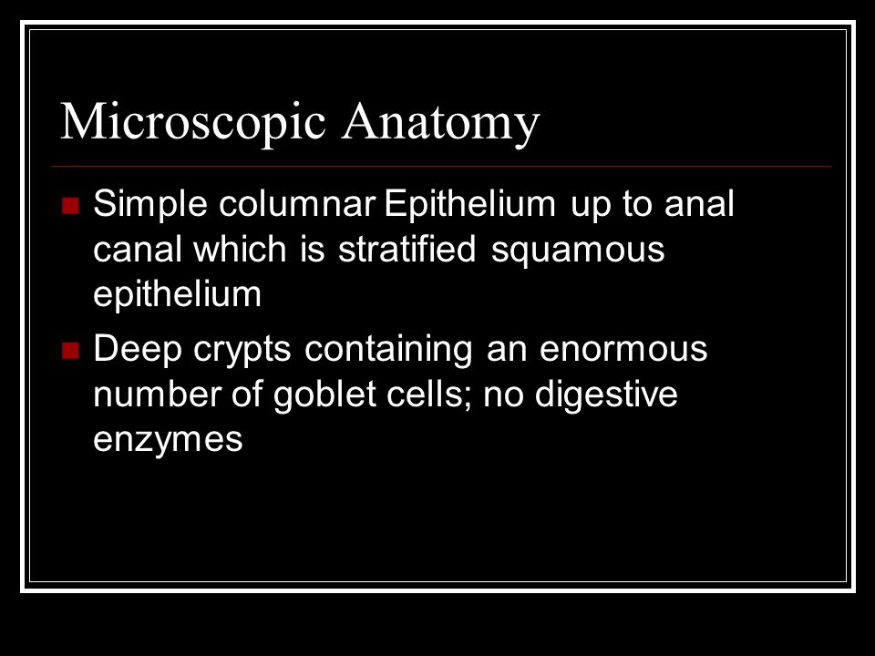 Microscopic Anatomy Simple columnar Epithelium up to anal canal which is stratified squamous epithelium.