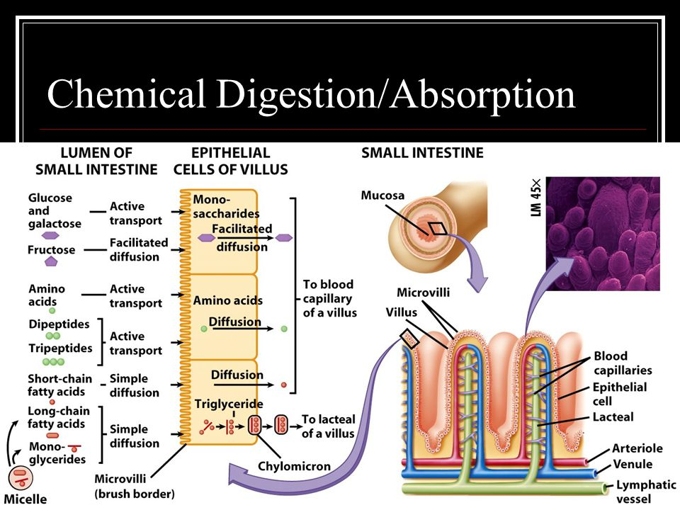 Chemical Digestion/Absorption