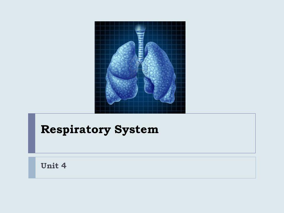 Respiratory System Unit 4