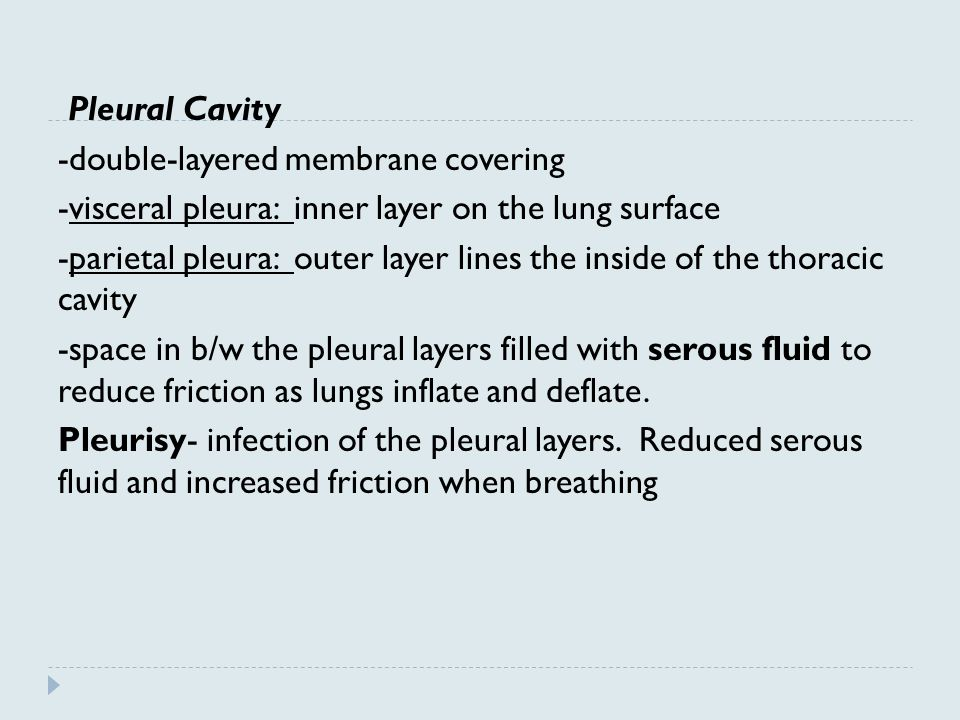 Pleural Cavity -double-layered membrane covering. -visceral pleura: inner layer on the lung surface.
